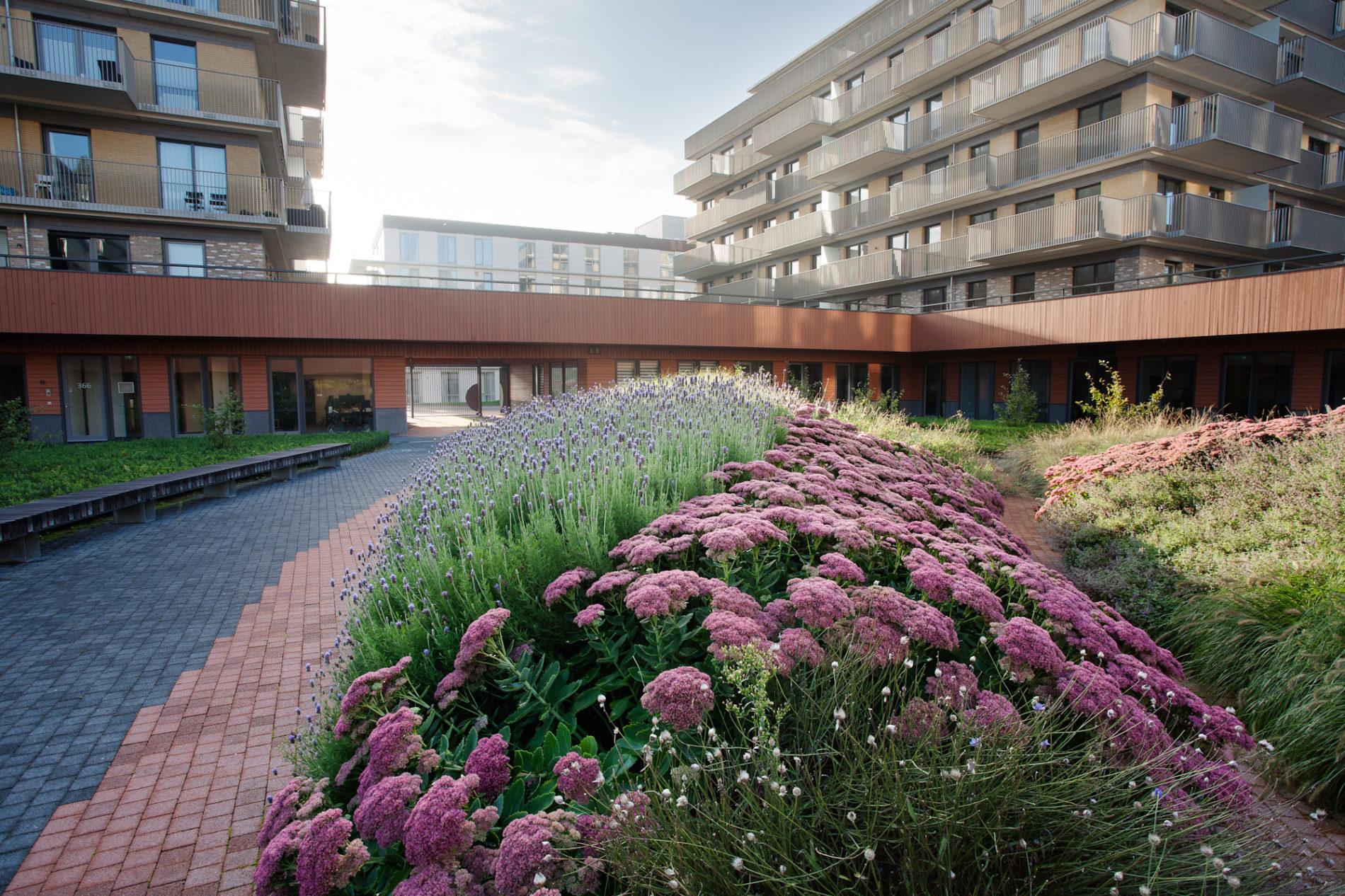 De Ontmoeting Amstelveen binnentuin bloemen