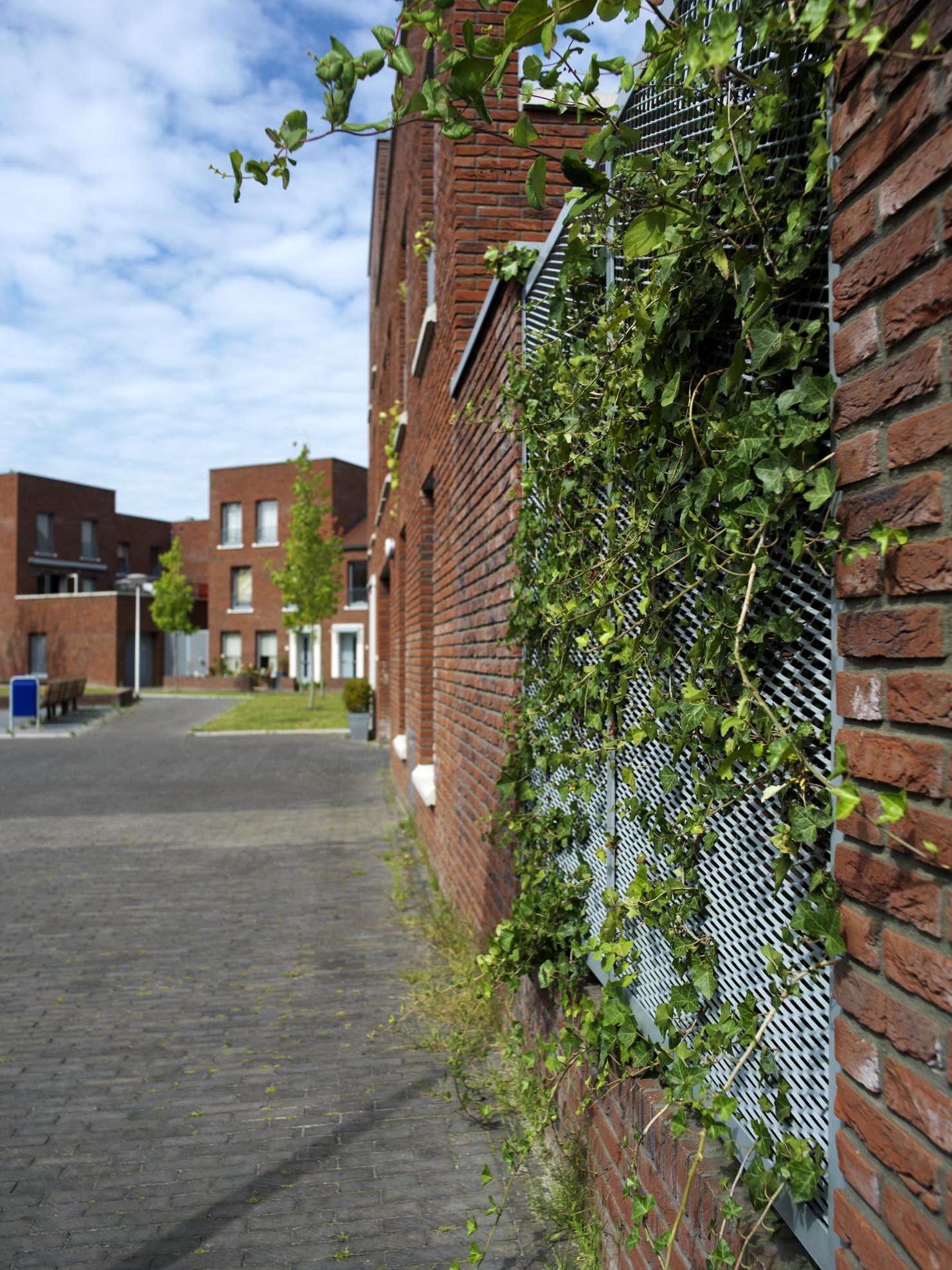 Kruidenbuurt Eindhoven beplanting muren