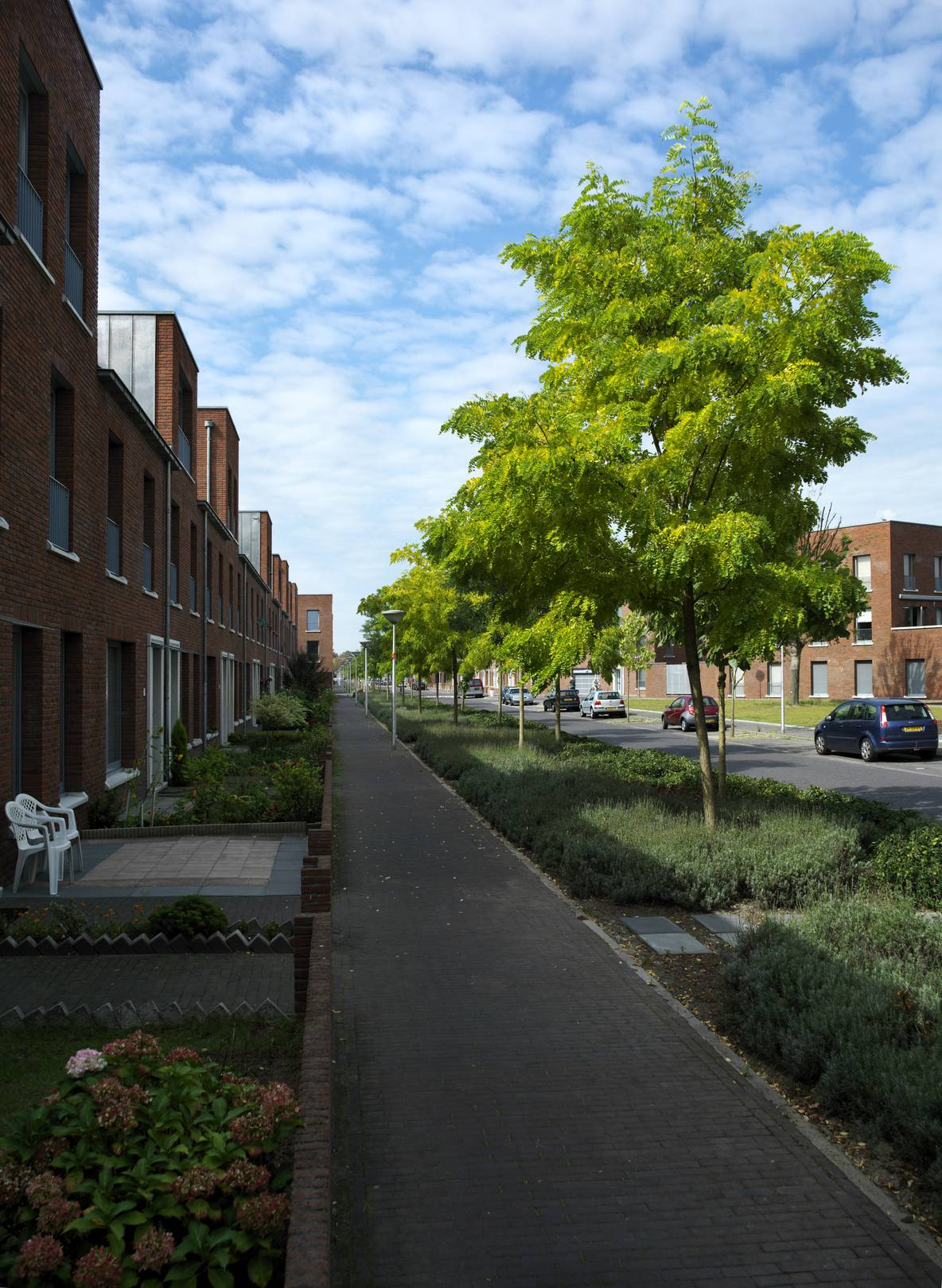 Kruidenbuurt Eindhoven tuinen en bomenrij